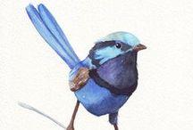 {birds}
