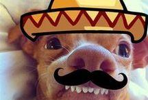 Tuna the adorable dog