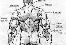 Anatomy: Shoulder & Arm / Learning and reference material for drawing the human shoulder and arm through understanding the structure of bones and muscles. Includes studies of multiple perspectives and poses. / by clarioncat