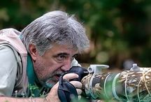 Stefano Ronchi - Frammenti di Natura / Wildlife Immages