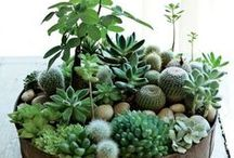 •  Plantes/Plants  •