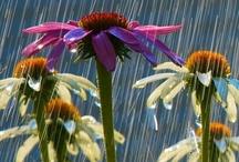 gardens! / by Susan Hausser