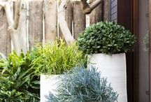 Gardening - containers & vertical / by Jacquelyn Gray