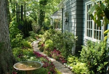 Gardens - Shade Plants, Moss, etc