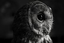 Owls / by Hillary
