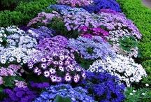 Gardens: Landscaping Ideas