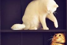 My Future Pets / by Casie Antony