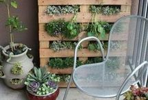 City/Apartment Gardening / by Heirloom Organics