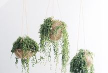 Indoor Plants / Indoor plants and urban jungles. Cut flowers, flower arranging and planters