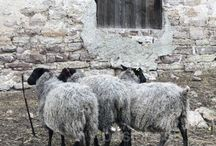 Sheep & Wool / Celebrating wool as a resource for textile artists, shepherding, sheep farming and British wool.
