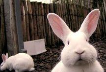 i heart bunny / by Nina Rangel