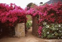 My Dream Yard / Beautiful Yards