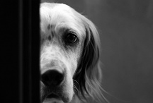 Dogs / You have to love them. / by Carel DiGrappa