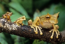 Frogs / by Jenny Repper