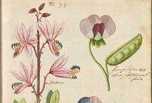 ✤ Herbiers et illustrations de plantes ✤ / Botanical images / by Mademoiselle Samantha