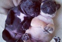 Kiddos & Puppies etc.
