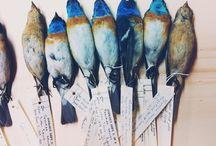 Birds / by Babianne Beck