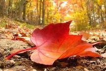 FALL - best season of all / all things Autumn/Fall / by Brenda Lipko