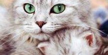 Lovely Cats / A magia e o encanto dos gatos num álbum cheio de amor