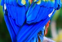 Birds - Oiseaux