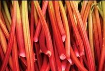 Rhubarb Season / All sorts of deliciousness using rhubarb.