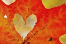FALL / fall in love with sweaters, crisp leaves, boots, hot apple cider, and scarves