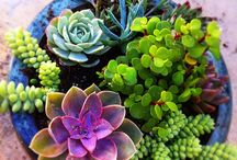 Gardening, Flower Beds, Succulents & more! / by ArmyMom Melanie