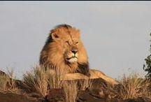 Massai Mara, Kenya / Trip to the Massai Mara, Kenya