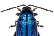 /entomology / by Carl Sutton