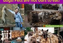 ANIMAL RIGHTS / Awareness for animals... / by Jennifer McDonald