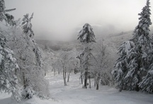 winter  / by Lynn Jones