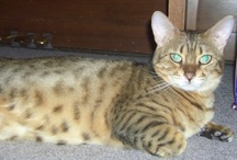 CATS!!! / by Nancy Jones