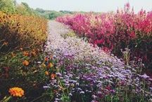 flowers/plants/etc
