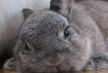 Super Cute Animals!! :) / by Sabrina Auer