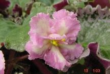 African Violets & Orchids / by Jeanette Haygood