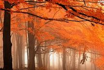 Orange: Zest for Life / Brings out the best ~ what Not Just Powder loves #beauty #socialmedia #pinterest