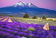 Purple: Natural Wonder / The vibrancy of natural purple hues is mesmerising ~ adding green gives a sense of balance, calm and wonder  ~ what Not Just Powder loves #beauty #socialmedia #pinterest