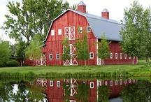 Born in a Barn / by Aimee Tice