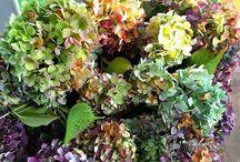 Gardening/Yard/Flowers / Outdoor yard items / by Shannon Haynes