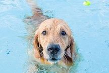 Pools & Paws / Man's best friend loves to chill out in the pool as much as you do.