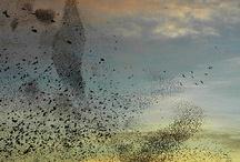 Birds / by Ginny Crabtree