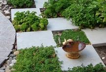 In My Pretty Garden