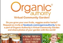Grow Your Own! - An Organic Authority Virtual Community Garden / Welcome to Organic Authority's Virtual Community Garden! Do you grow your own fruits, veggies or herbs? Do you have any DIY garden projects like canning, preserving or cooking straight from your garden? Head to our page here http://on.fb.me/14S3WH5 to request an invite so you can add photos and descriptions of your garden to this board. Let's make this the biggest community garden on Pinterest!