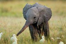 Baby animals / Animaux trop choux.