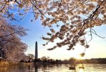 Divine D.C. / Favorite places, events, and discoveries in our Nation's Capital. / by Jenni H