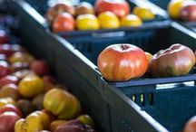 No More Food Waste / Organic Authority's tips and tricks for avoiding food waste from kitchen storage to shopping smarter.