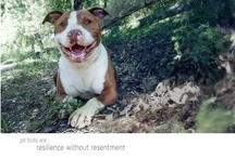 Dogs are better than people / My babies and others - RESCUE A PIT BULL! <3 :) / by Mila Ortiz