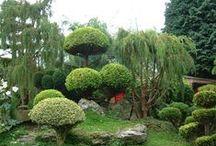 Garden I wish for me