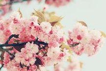 Flowers & Lace / & Weddings &  a Beautiful Haze