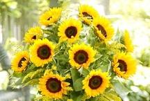 My favorite flower / by Laurie Bosse